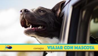 Viajar con Mascotas - Consejos para viajar con mascotas